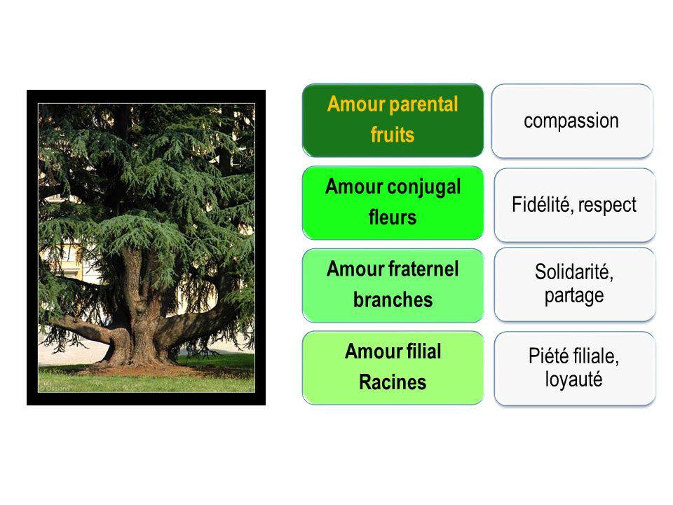 Amour parental fruits Amour conjugal fleurs Amour fraternel branches Amour filial Racines compassionFidélité, respect Solidarité, partage Piété filiale, loyauté