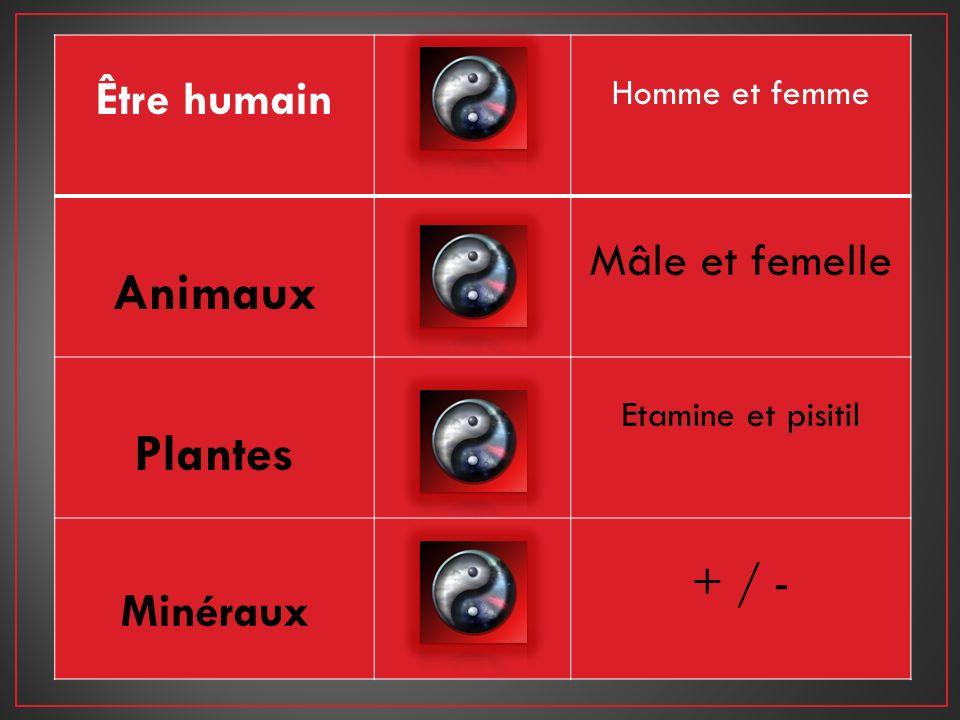 Être humain Homme et femme Animaux Mâle et femelle Plantes Etamine et pisitil Minéraux + / -