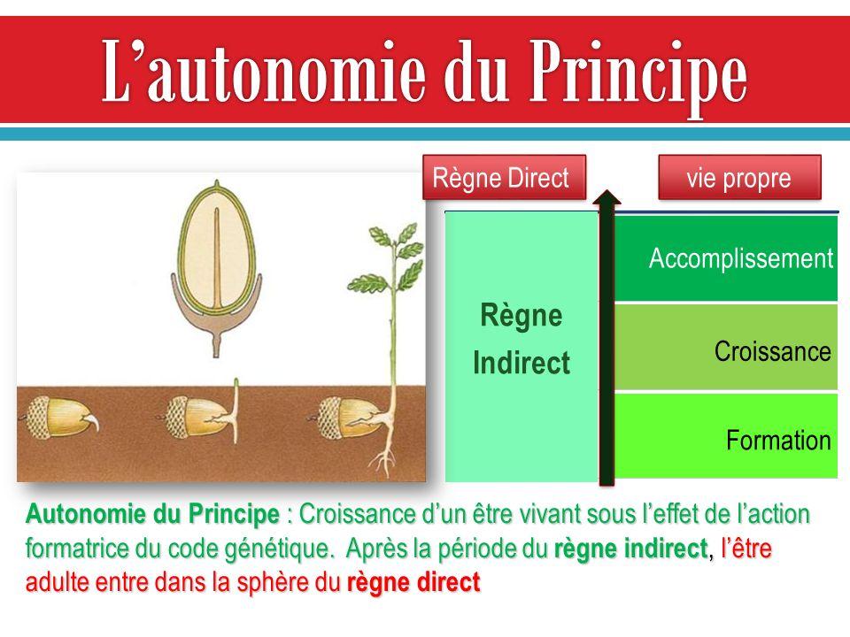Règne Indirect Accomplissement Croissance Formation vie propre Autonomie du Principe : Croissance dun être vivant sous leffet de laction formatrice du