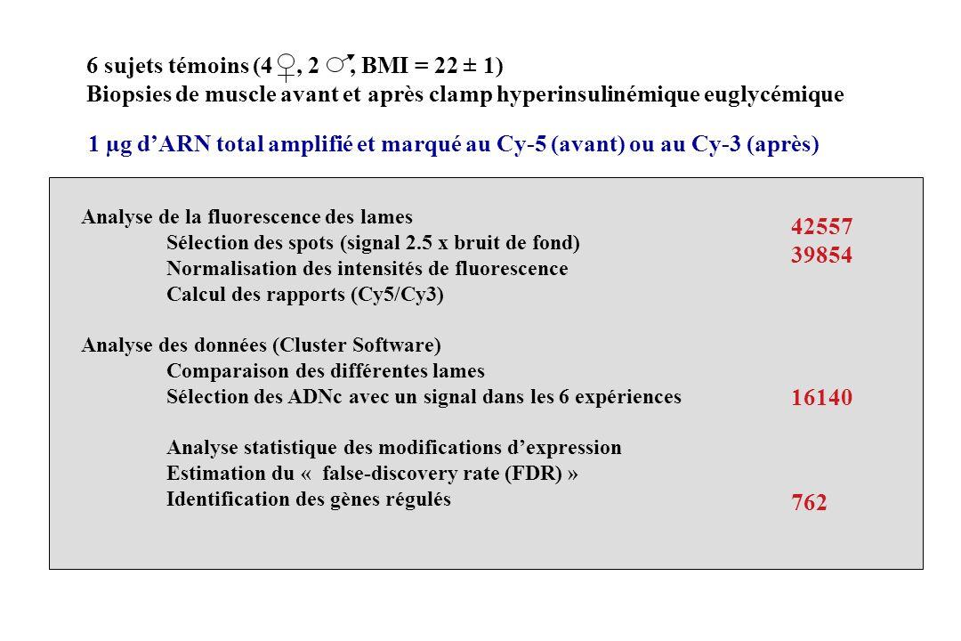 1 µg dARN total amplifié et marqué au Cy-5 (avant) ou au Cy-3 (après) 6 sujets témoins (4, 2, BMI = 22 ± 1) Biopsies de muscle avant et après clamp hy