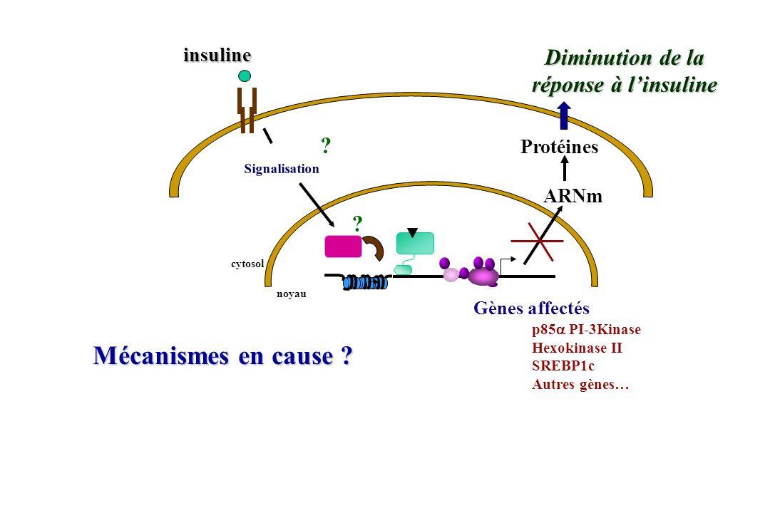 noyau ARNm Protéines cytosol ? Diminution de la réponse à linsuline insuline Signalisation Gènes affectés p85 PI-3Kinase Hexokinase II SREBP1c Autres