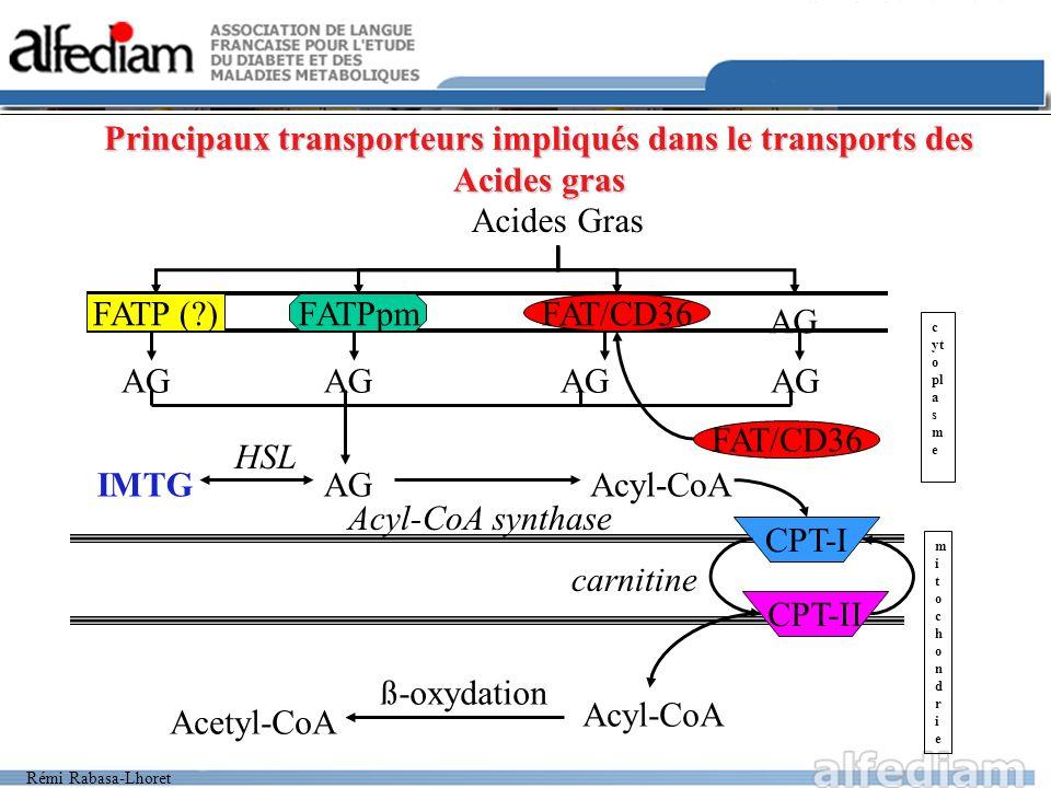 Rémi Rabasa-Lhoret Principaux transporteurs impliqués dans le transports des Acides gras Acides Gras FATPpmFATP (?)FAT/CD36 AG IMTG HSL Acyl-CoA Acyl-
