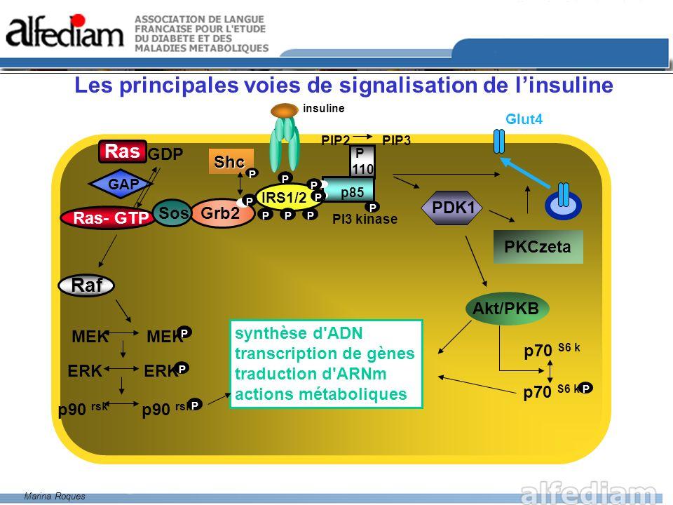 Propagation du signal Signalisation de linsuline : de la PI3 kinase à lactivation de la PKB PI 3,4 P2 PI 3,4,5 P3 PI 3 kinase Récepteur de l insuline PKB cytosolique PH Thr 308 Translocation Changement de conformation PH Thr 308 PKB active p85 p110 P P P P P P P P IRS PHPH P P insuline PDK1 Adapté de Sophie Grillo, par Marina Roques