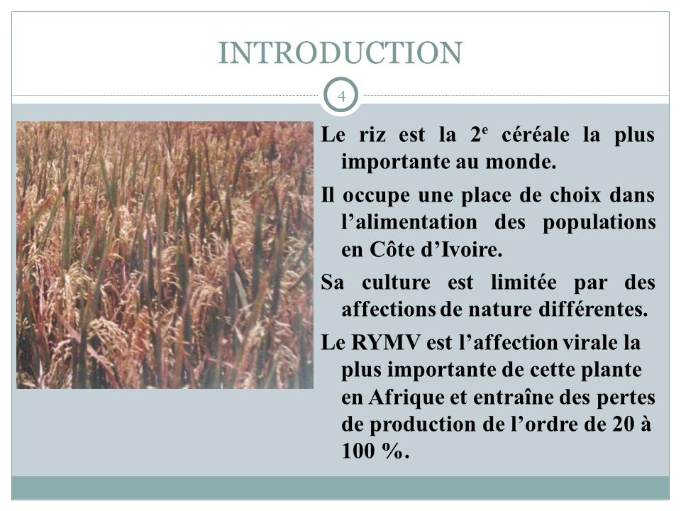 INTRODUCTION 4 Le riz est la 2 e céréale la plus importante au monde. Il occupe une place de choix dans lalimentation des populations en Côte dIvoire.