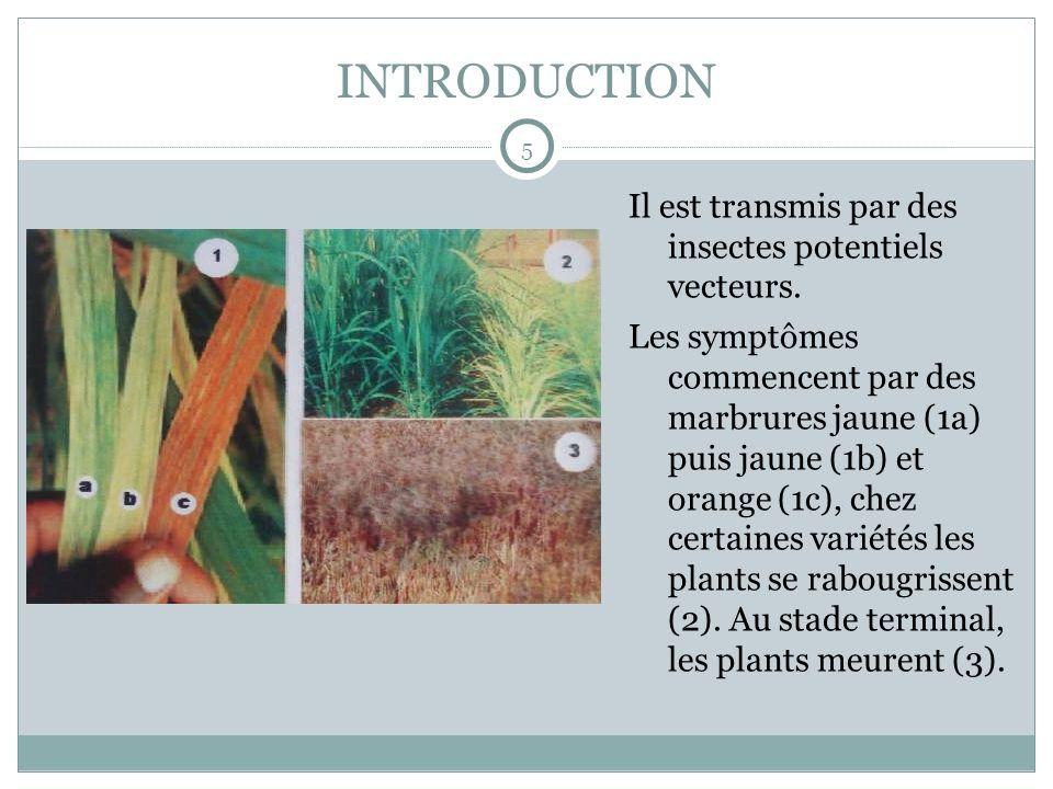 INTRODUCTION Il est transmis par des insectes potentiels vecteurs. Les symptômes commencent par des marbrures jaune (1a) puis jaune (1b) et orange (1c
