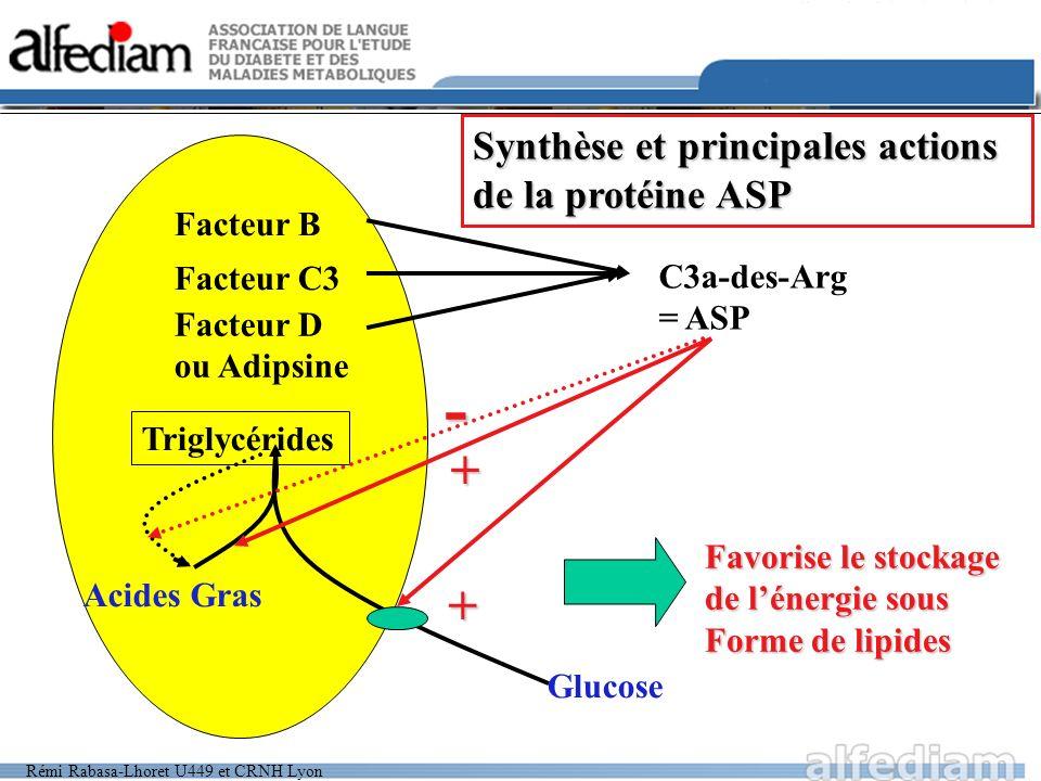 Rémi Rabasa-Lhoret U449 et CRNH Lyon Facteur B Facteur C3 Facteur D ou Adipsine C3a-des-Arg = ASP Triglycérides Acides Gras Glucose + + Synthèse et pr