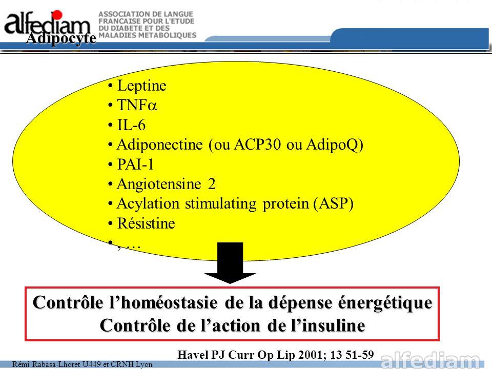 Rémi Rabasa-Lhoret U449 et CRNH Lyon Adipocyte Contrôle lhoméostasie de la dépense énergétique Contrôle de laction de linsuline Leptine TNF IL-6 Adipo
