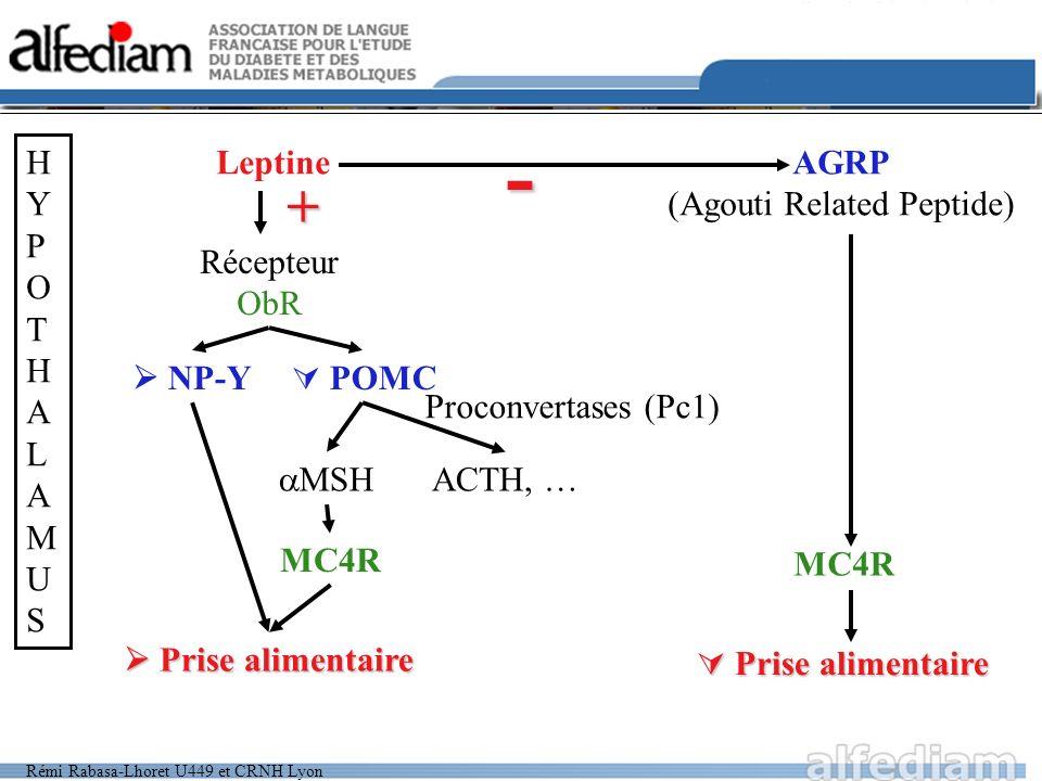 Rémi Rabasa-Lhoret U449 et CRNH Lyon AGRP (Agouti Related Peptide) HYPOTHALAMUSHYPOTHALAMUS Leptine Récepteur ObR POMC Proconvertases (Pc1) MSH ACTH,