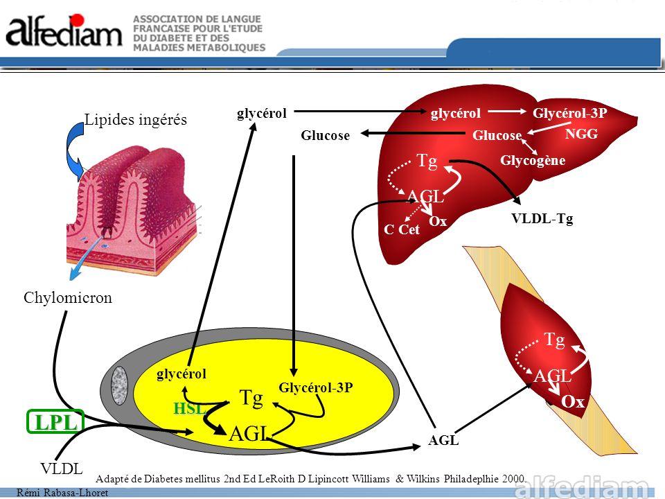 Rémi Rabasa-Lhoret AGL Tg glycérol Lipides ingérés Chylomicron VLDL LPL Glycérol-3P Glucose glycérolGlycérol-3P Glucose Glycogène AGL Tg Ox C Cet AGL