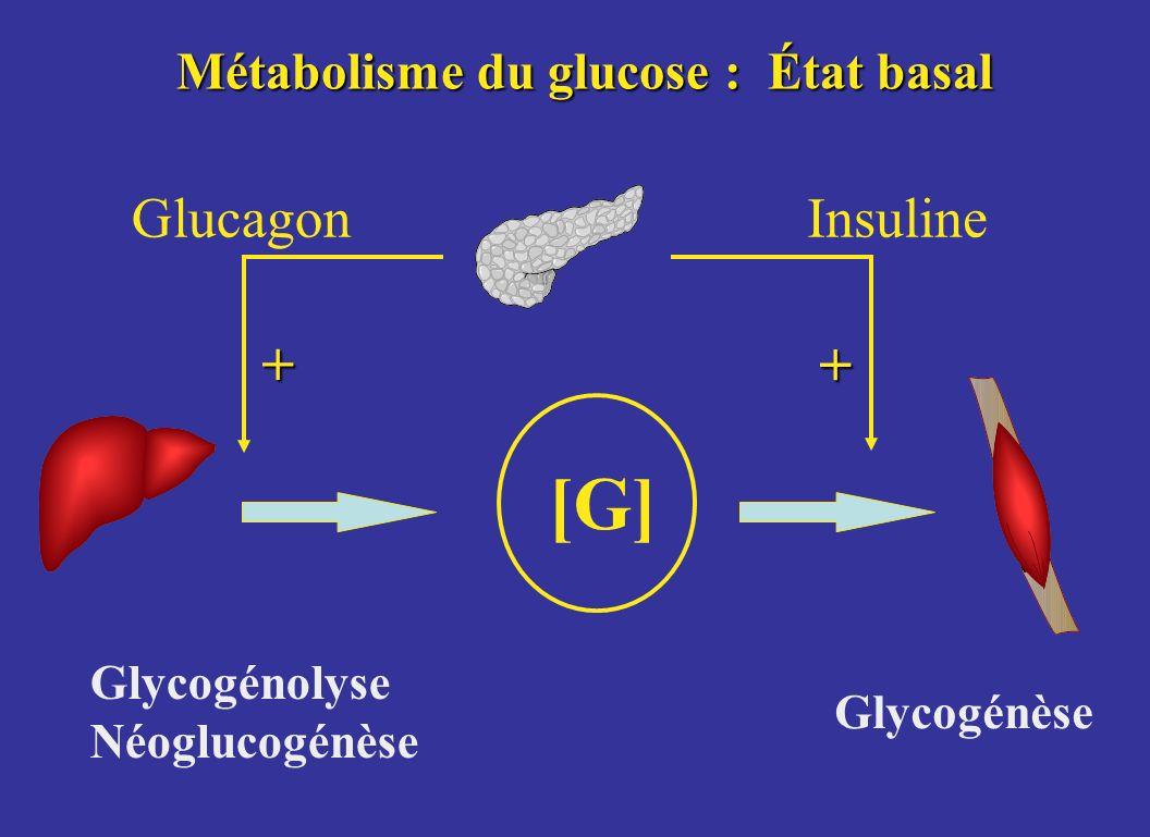 Métabolisme du glucose : État basal [G] GlucagonInsuline Glycogénolyse Néoglucogénèse Glycogénèse + +