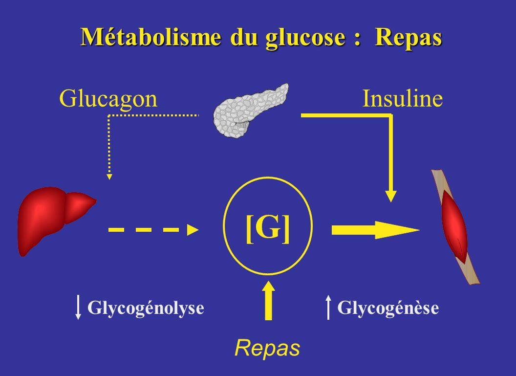 Métabolisme du glucose : Repas [G] GlucagonInsuline GlycogénolyseGlycogénèse Repas