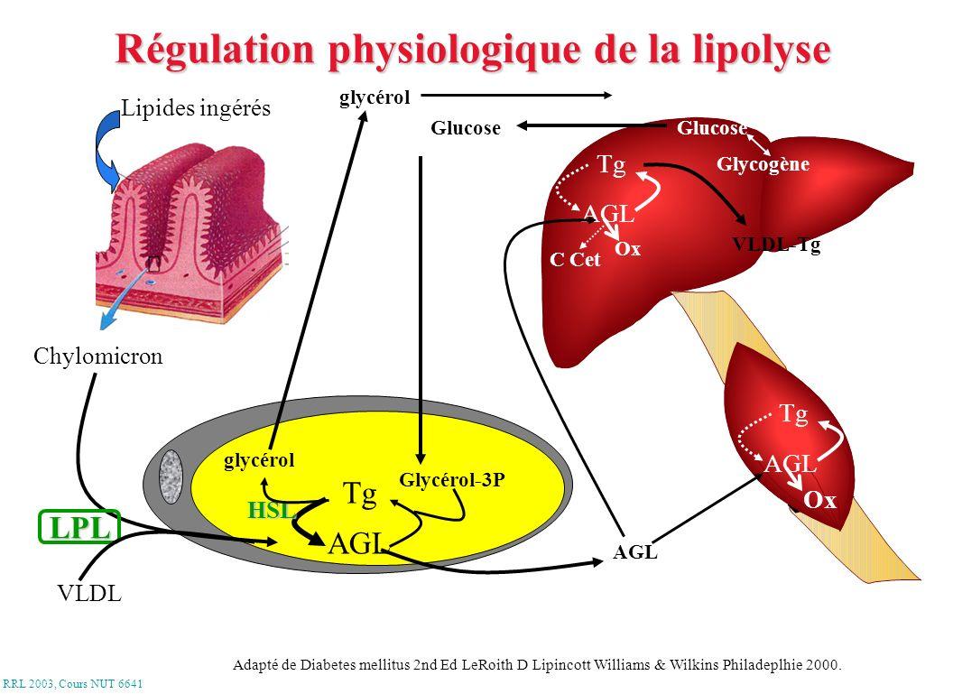 RRL 2003, Cours NUT 6641 AGL Tg glycérol Lipides ingérés Chylomicron VLDL LPL Glycérol-3P Glucose glycérolGlycérol-3P Glucose Glycogène AGL Tg Ox C Ce