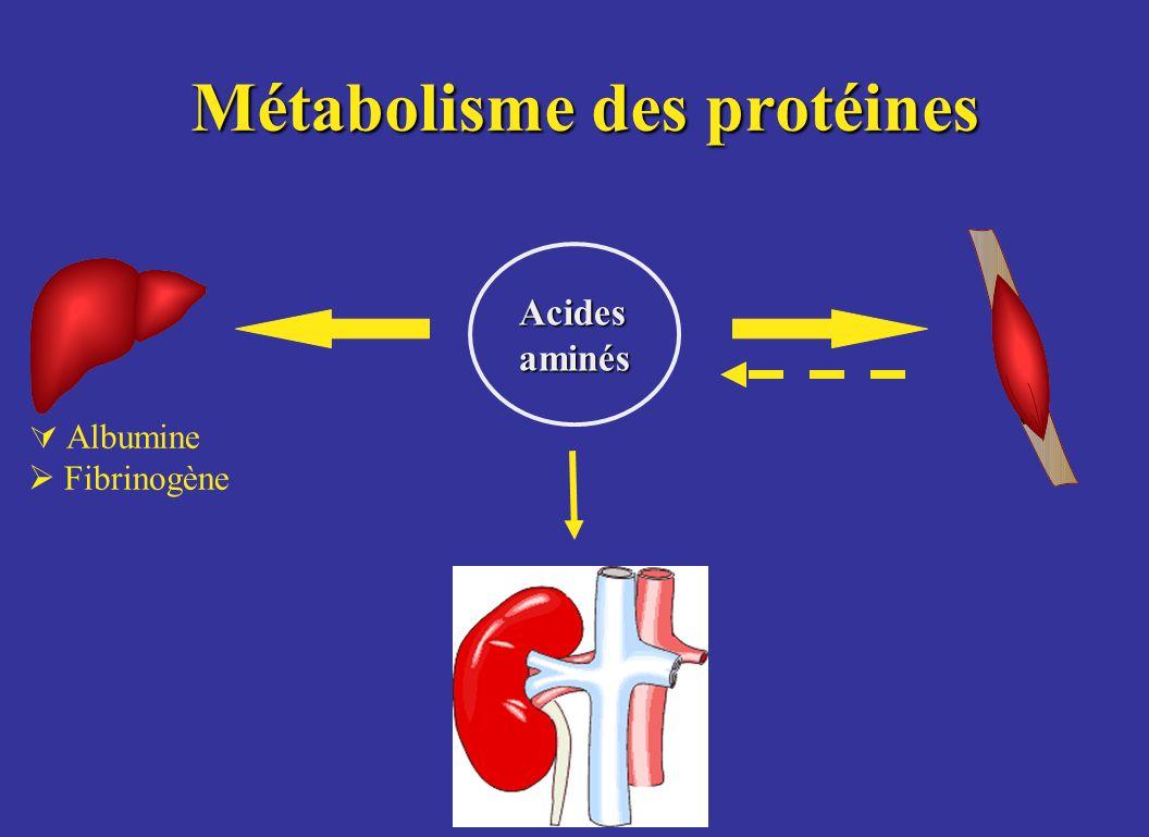 Métabolisme des protéines Acidesaminés Albumine Fibrinogène