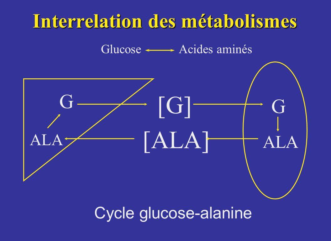 Interrelation des métabolismes GlucoseAcides aminés ALA [G] G [ALA] ALA Cycle glucose-alanine G