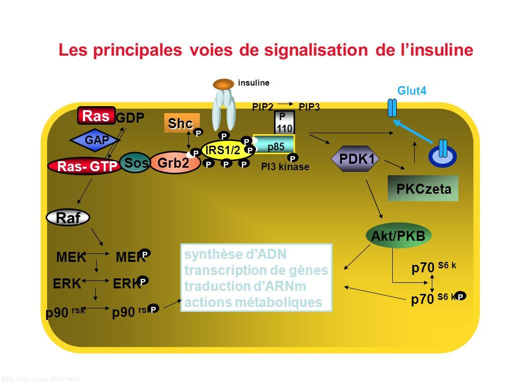 RRL 2003, Cours NUT 6641 Grb2 synthèse d'ADN transcription de gènes traduction d'ARNm actions métaboliques Ras GDP Ras- GTP GAP p70 S6 k P P 110 p85 P
