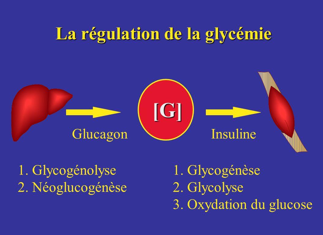 La régulation de la glycémie [G] GlucagonInsuline 1. Glycogénolyse 2. Néoglucogénèse 1. Glycogénèse 2. Glycolyse 3. Oxydation du glucose