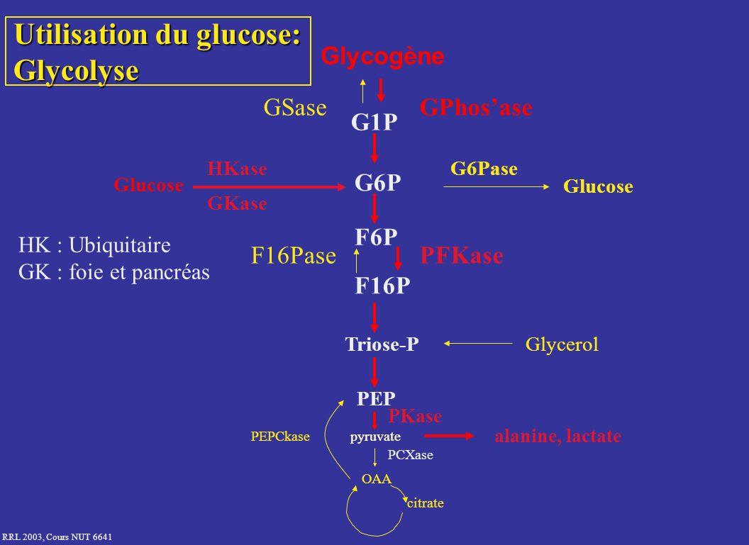 RRL 2003, Cours NUT 6641 Utilisation du glucose: Glycolyse Glycogène GSaseGPhosase G1P Glucose HKase GKase G6P G6Pase F6P F16PasePFKase F16P Triose-PG