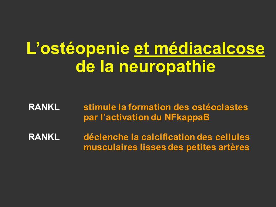 RANKLstimule la formation des ostéoclastes par lactivation du NFkappaB RANKLdéclenche la calcification des cellules musculaires lisses des petites art