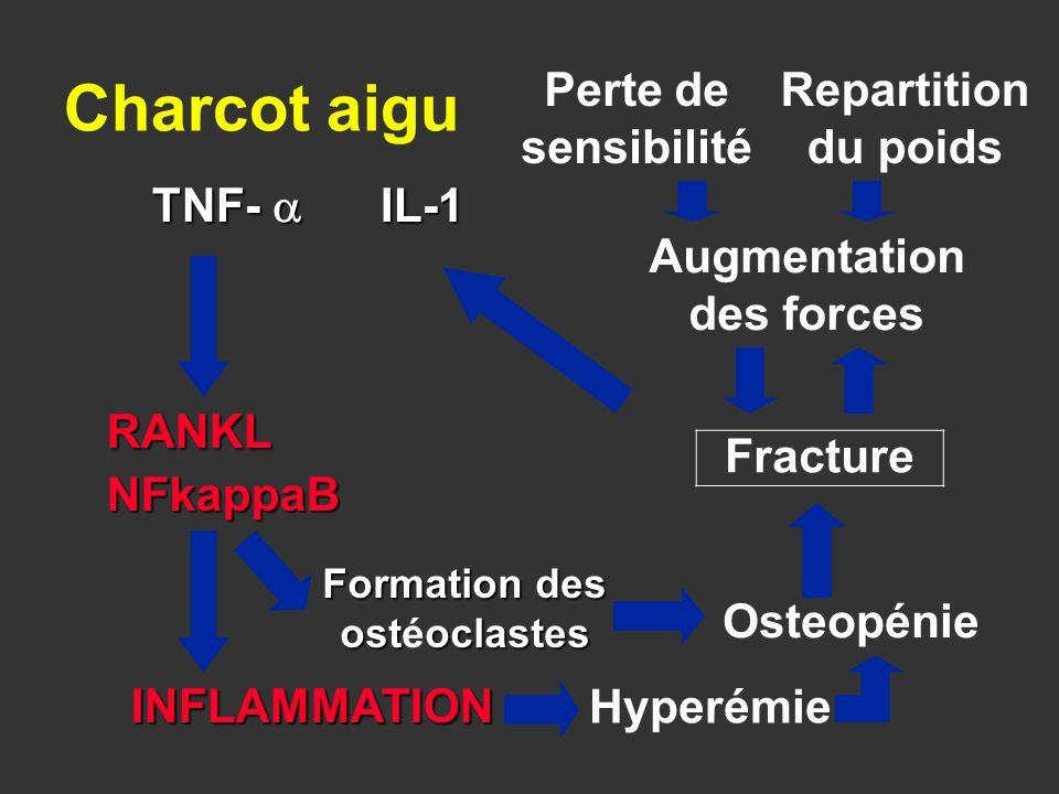 Fracture INFLAMMATION TNF- IL-1 RANKLNFkappaB Formation des ostoclastes Formation des ostéoclastes Osteopénie Charcot aigu Perte de sensibilité Repart
