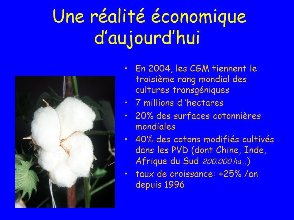 Une réalité économique daujourdhui En 2004, les CGM tiennent le troisième rang mondial des cultures transgéniques 7 millions d hectares 20% des surfaces cotonnières mondiales 40% des cotons modifiés cultivés dans les PVD (dont Chine, Inde, Afrique du Sud 200.000 ha …) taux de croissance: +25% /an depuis 1996