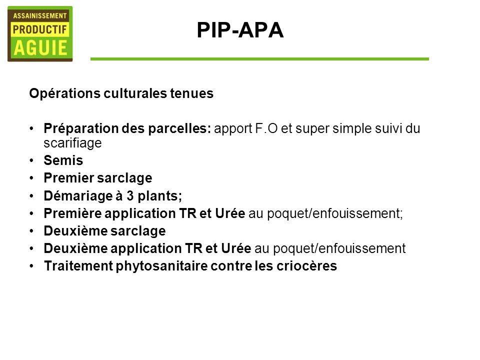 PIP-APA Opérations culturales tenues Préparation des parcelles: apport F.O et super simple suivi du scarifiage Semis Premier sarclage Démariage à 3 pl