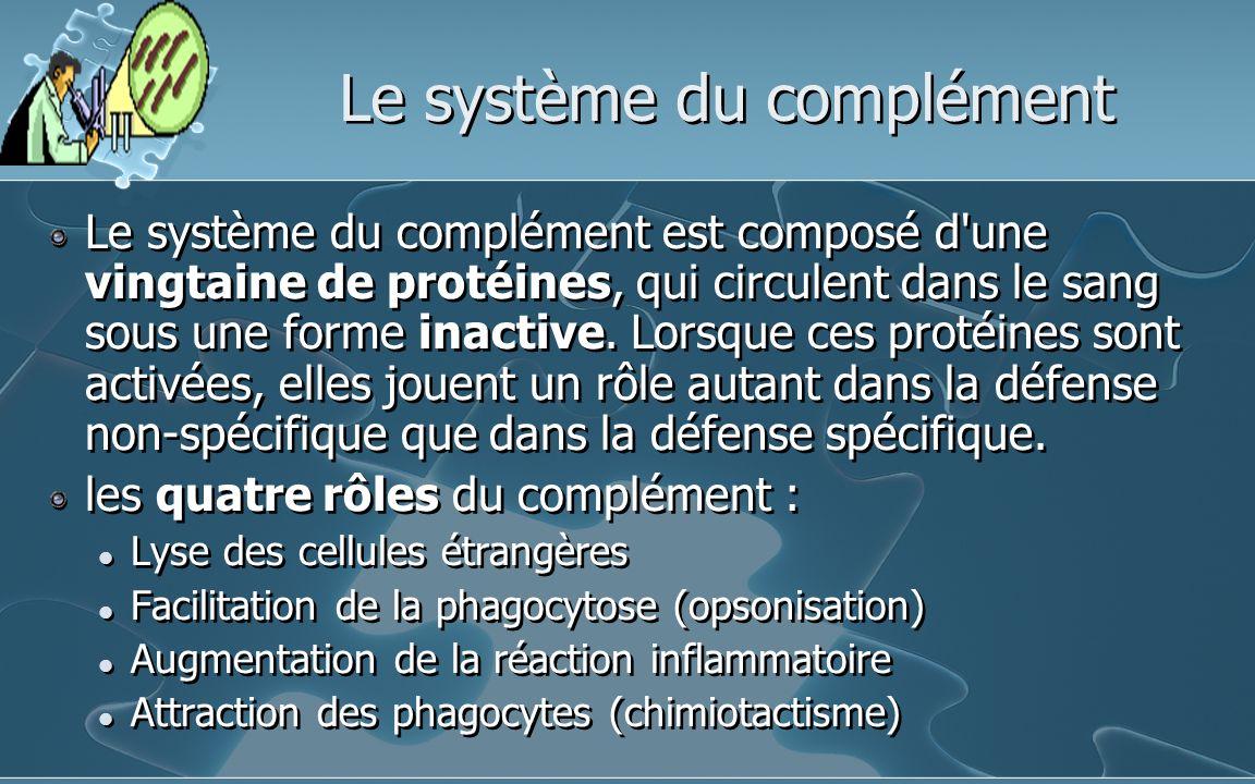 Le système du complément Le système du complément est composé d'une vingtaine de protéines, qui circulent dans le sang sous une forme inactive. Lorsqu