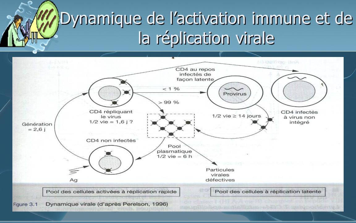 Dynamique de lactivation immune et de la réplication virale