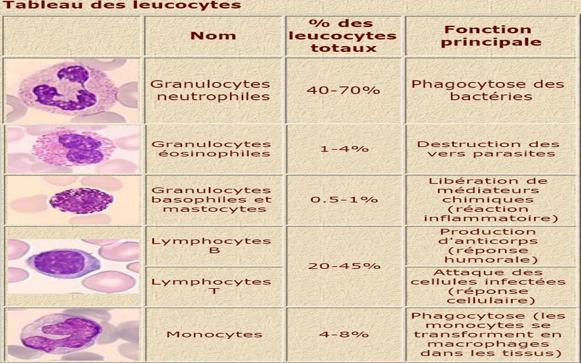 Lymphocytes T Ils sont responsables de la réponse cellulaire.