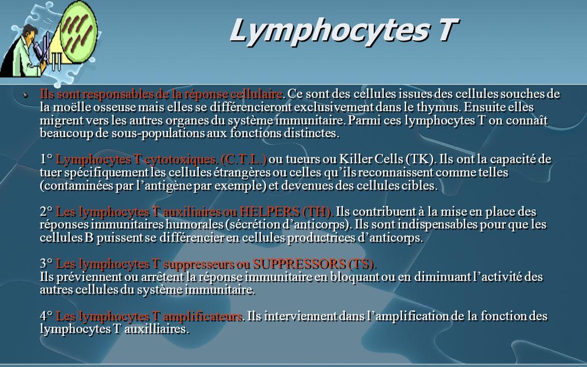 Lymphocytes T Ils sont responsables de la réponse cellulaire. Ce sont des cellules issues des cellules souches de la moëlle osseuse mais elles se diff