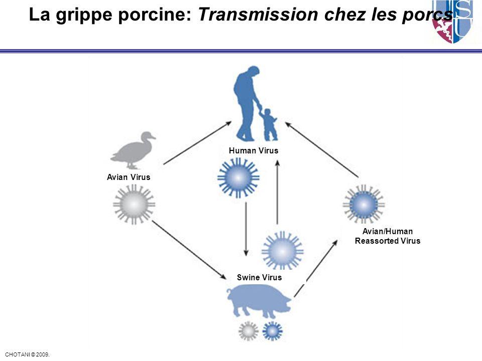 CHOTANI © 2009. La grippe porcine: Transmission chez les porcs Avian Virus Human Virus Swine Virus Avian/Human Reassorted Virus