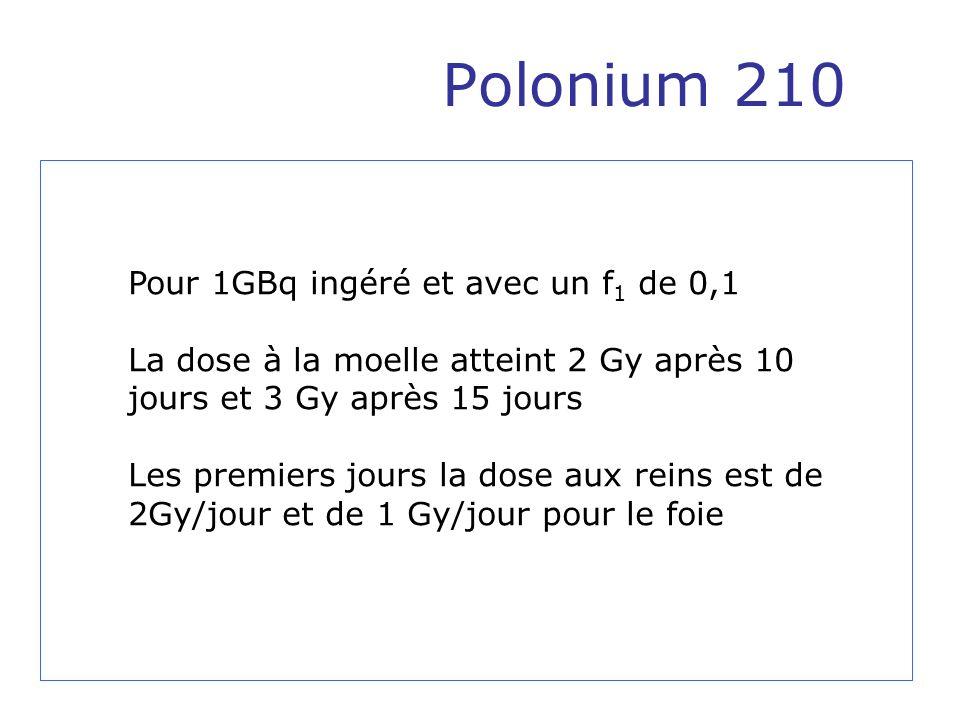 Polonium 210 Pour 1GBq ingéré et avec un f 1 de 0,1 La dose à la moelle atteint 2 Gy après 10 jours et 3 Gy après 15 jours Les premiers jours la dose