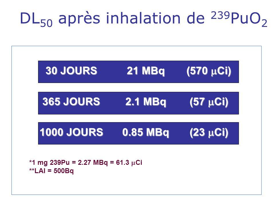 DL 50 après inhalation de 239 PuO 2 30 JOURS 21 MBq (570 Ci) 365 JOURS 2.1 MBq (57 Ci) 1000 JOURS 0.85 MBq (23 Ci) *1 mg 239Pu = 2.27 MBq = 61.3 Ci **