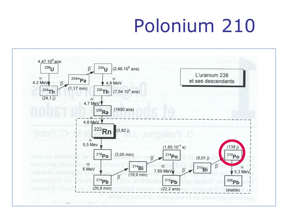 Peut être produit par bombardement neutronique du 209 Bi dans un réacteur nucléaire 209 Bi+n 210 Bi 210 Po, 5 jours