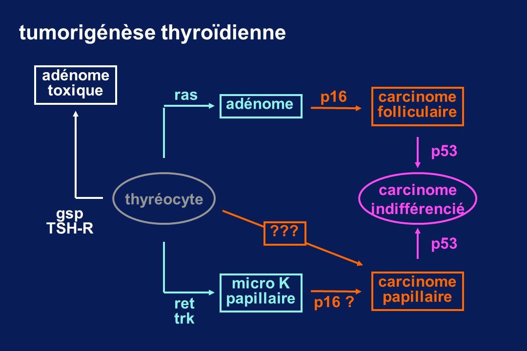 thyréocyte ras adénome p16 carcinome folliculaire carcinome indifférencié p53 ret trk micro K papillaire p16 ? carcinome papillaire p53 gsp TSH-R adén