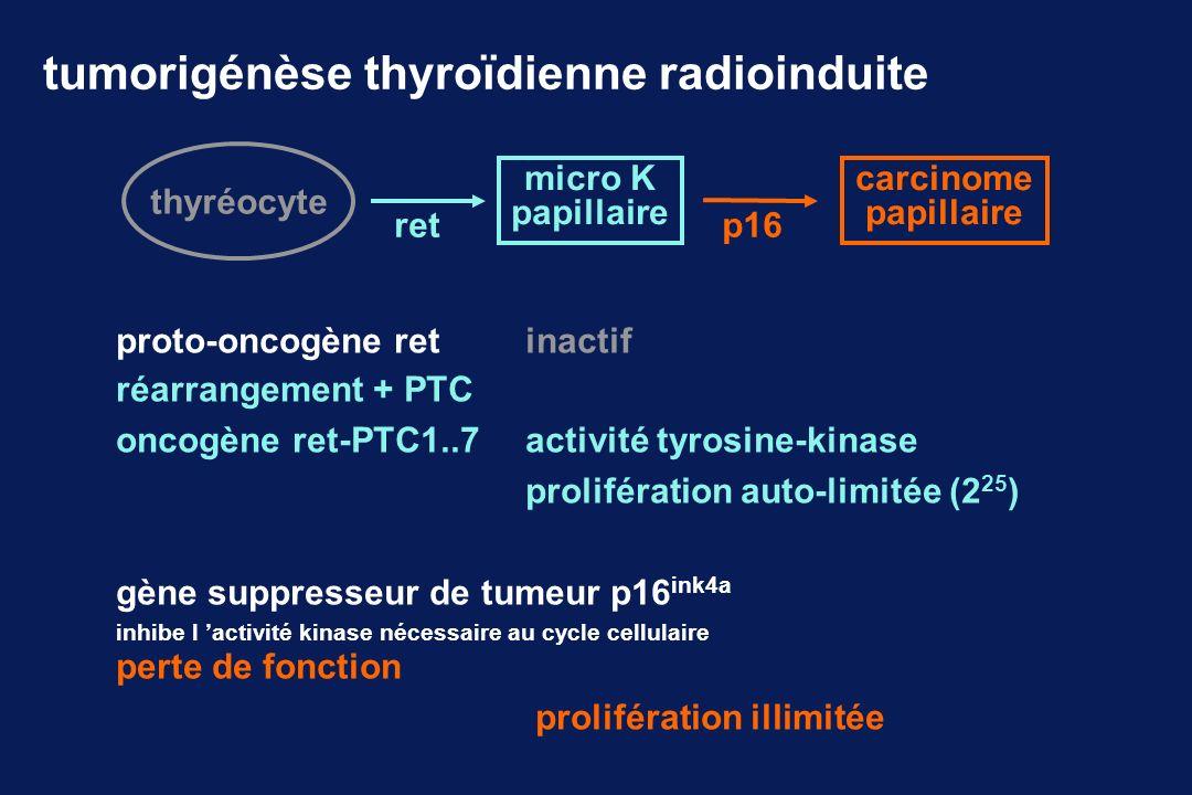 tumorigénèse thyroïdienne radioinduite thyréocyte ret micro K papillaire p16 carcinome papillaire réarrangement + PTC oncogène ret-PTC1..7activité tyr