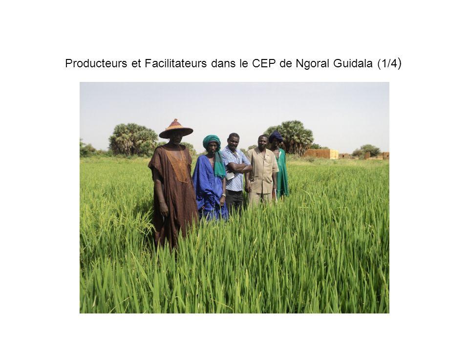 Producteurs et Facilitateurs dans le CEP de Ngoral Guidala (1/4 )