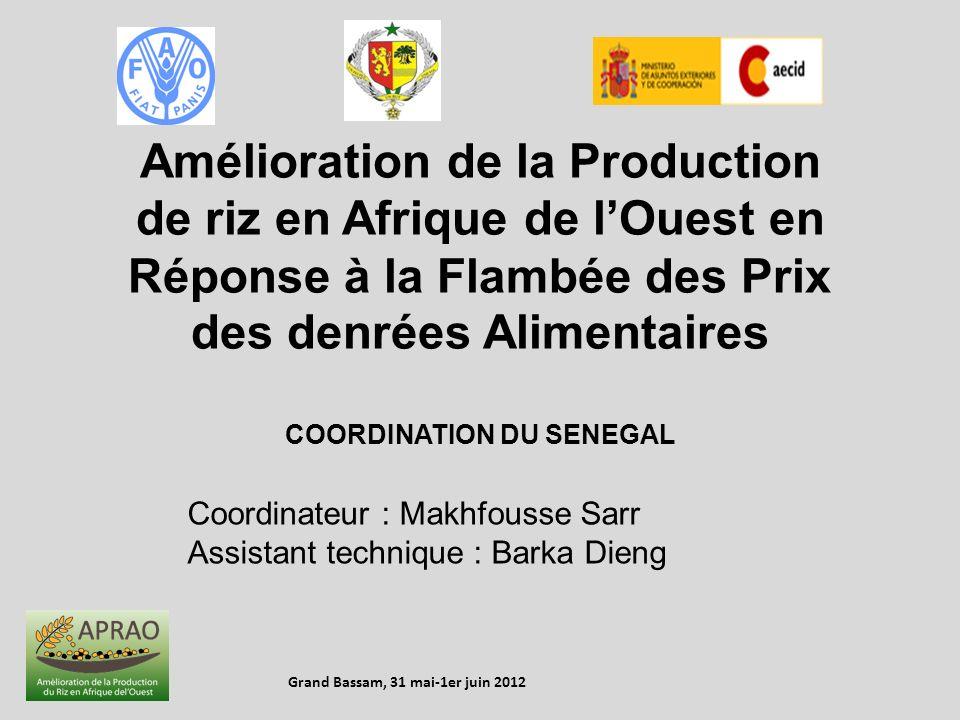 Amélioration de la Production de riz en Afrique de lOuest en Réponse à la Flambée des Prix des denrées Alimentaires COORDINATION DU SENEGAL Coordinate