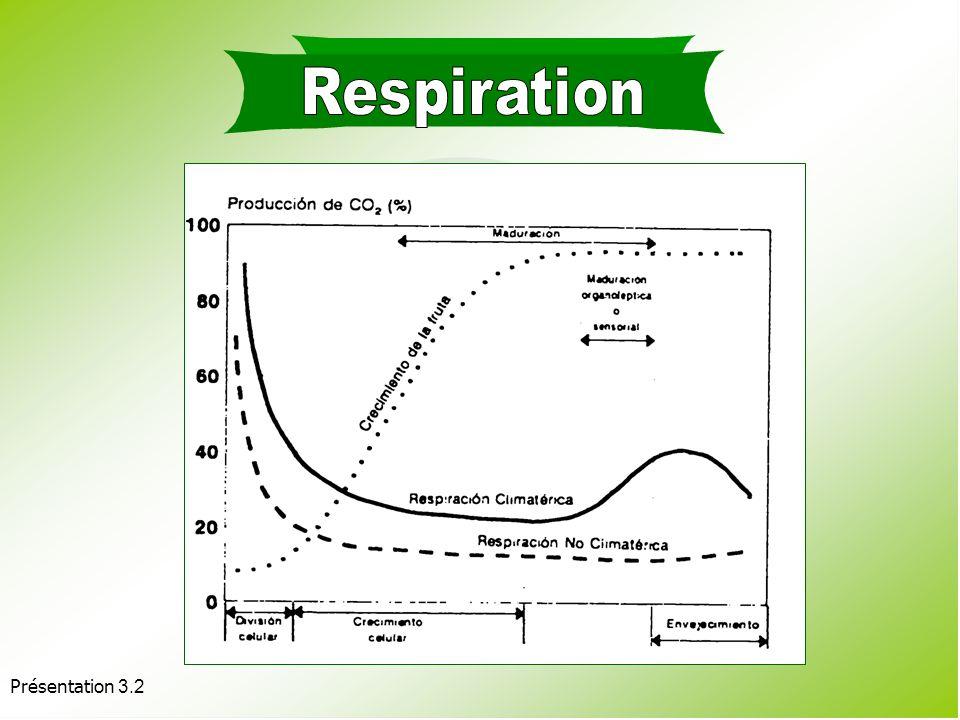 Présentation 3.2 Facteurs affectant la respiration : Internes : Type de tissu ou dorgane : feuilles > fruits > racines. Taille du produit : taille plu