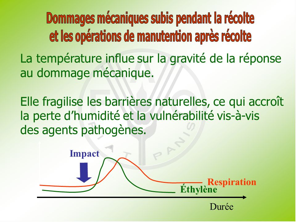 Présentation 3.2 Facteurs affectant la respiration : Externes : Les dommages mécaniques et la santé du produit.