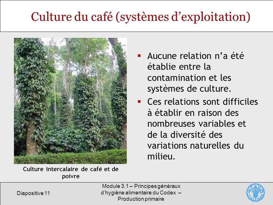 Diapositive 11 Module 3.1 – Principes généraux dhygiène alimentaire du Codex – Production primaire Culture du café (systèmes dexploitation) Aucune relation na été établie entre la contamination et les systèmes de culture.