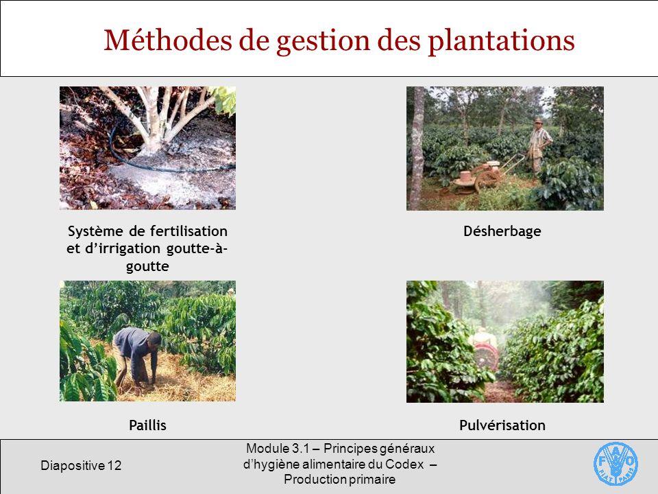Diapositive 12 Module 3.1 – Principes généraux dhygiène alimentaire du Codex – Production primaire Méthodes de gestion des plantations Système de fertilisation et dirrigation goutte-à- goutte Désherbage PaillisPulvérisation