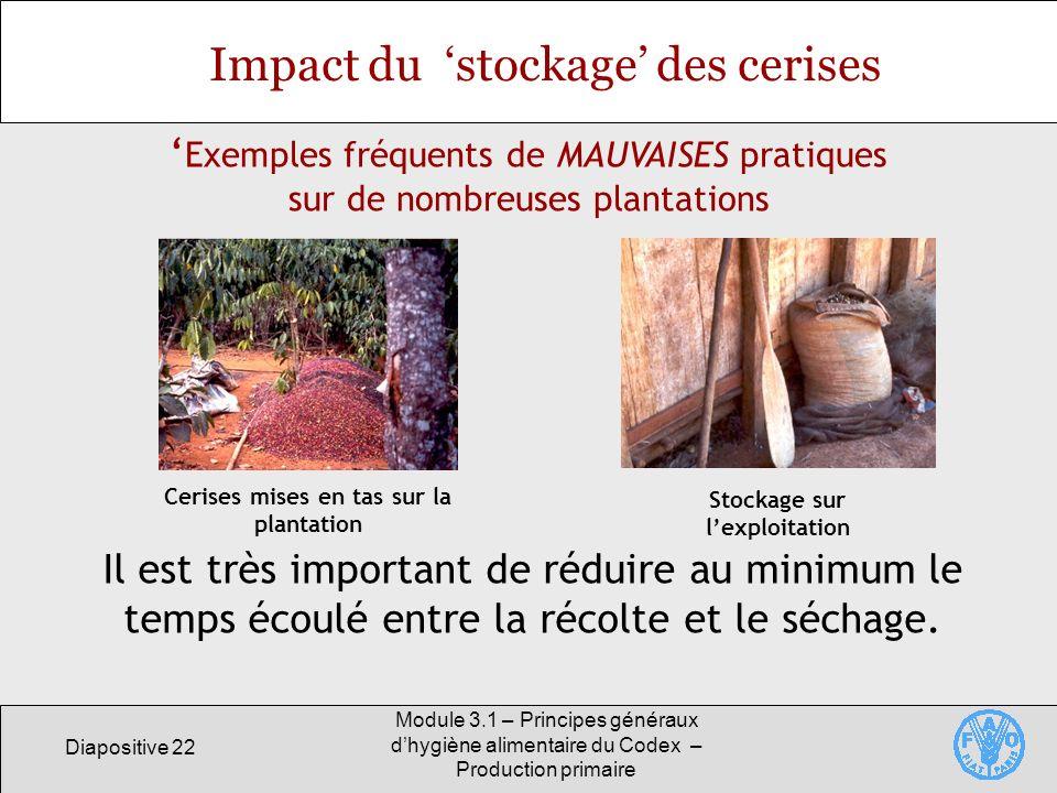 Diapositive 22 Module 3.1 – Principes généraux dhygiène alimentaire du Codex – Production primaire Impact du stockage des cerises Il est très important de réduire au minimum le temps écoulé entre la récolte et le séchage.