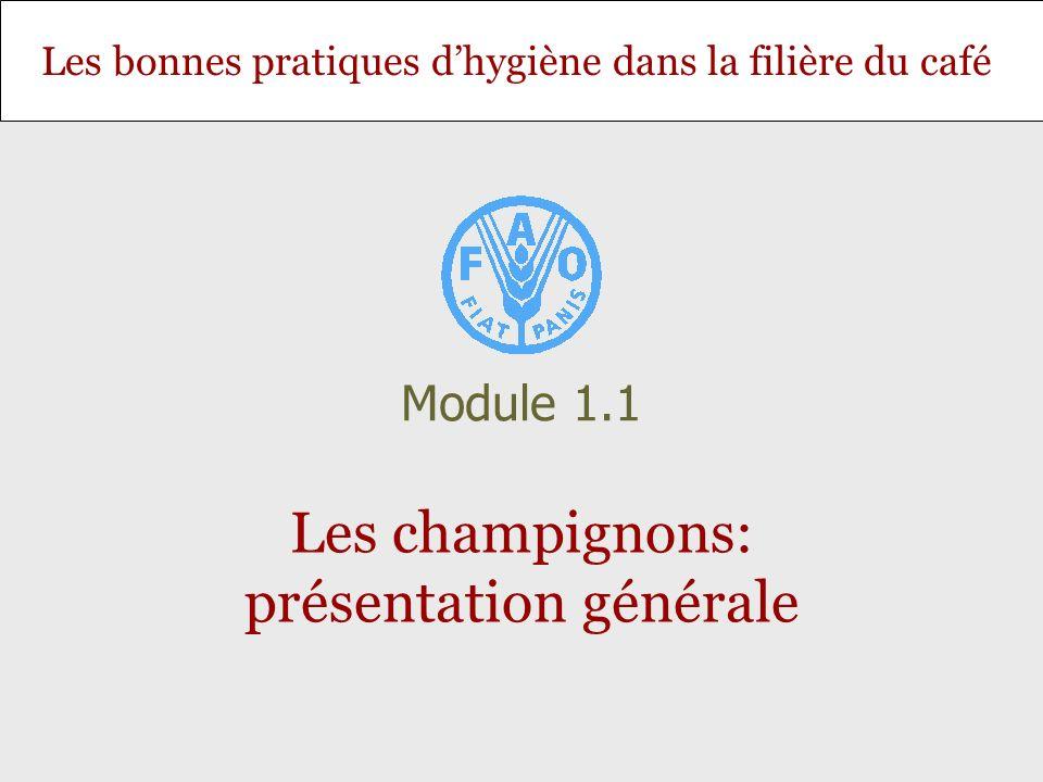 Les bonnes pratiques dhygiène dans la filière du café Les champignons: présentation générale Module 1.1