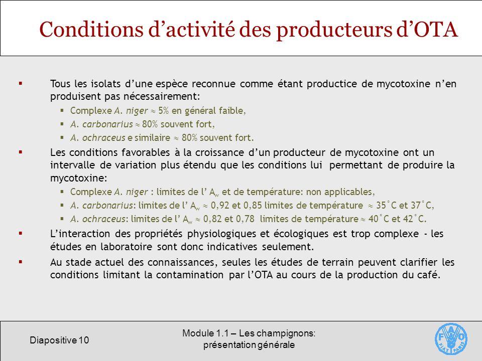 Diapositive 10 Module 1.1 – Les champignons: présentation générale Conditions dactivité des producteurs dOTA Tous les isolats dune espèce reconnue com