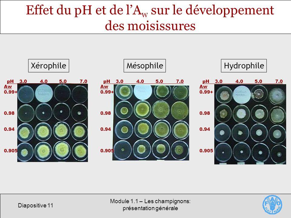 Diapositive 11 Module 1.1 – Les champignons: présentation générale Effet du pH et de lA w sur le développement des moisissures X H Xérophile pH 3.0 4.