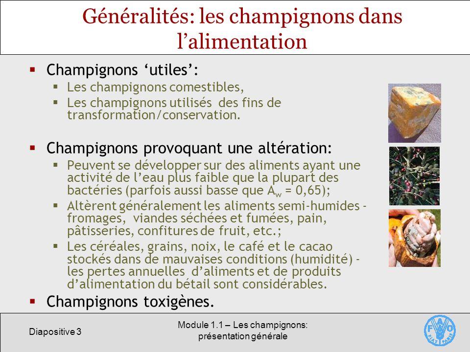 Diapositive 3 Module 1.1 – Les champignons: présentation générale Généralités: les champignons dans lalimentation Champignons utiles: Les champignons