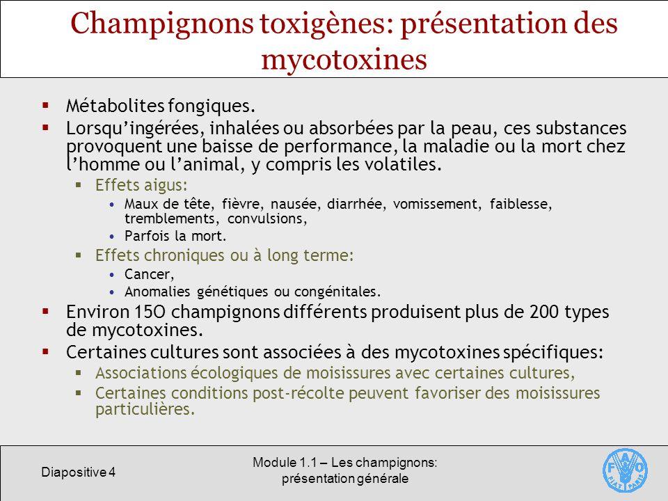 Diapositive 4 Module 1.1 – Les champignons: présentation générale Champignons toxigènes: présentation des mycotoxines Métabolites fongiques. Lorsquing