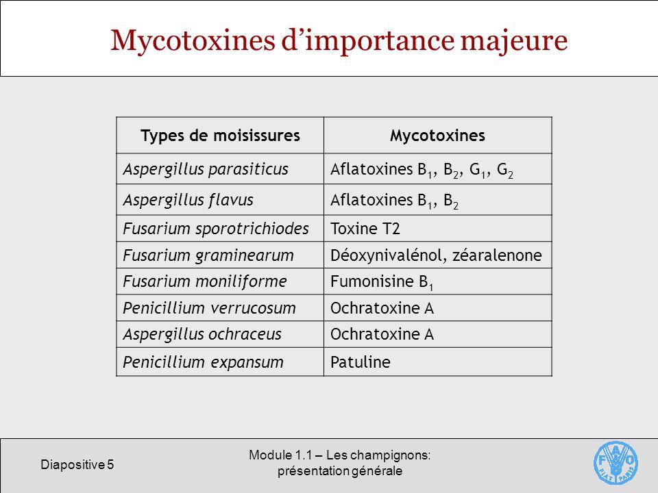 Diapositive 5 Module 1.1 – Les champignons: présentation générale Mycotoxines dimportance majeure Types de moisissuresMycotoxines Aspergillus parasiti