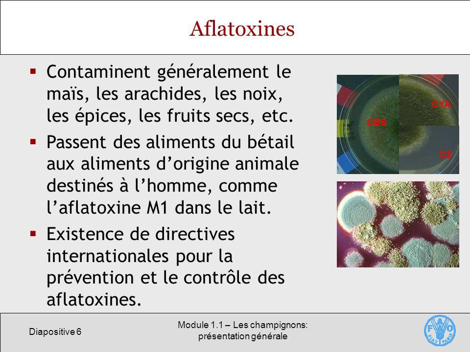 Diapositive 6 Module 1.1 – Les champignons: présentation générale Aflatoxines Contaminent généralement le maïs, les arachides, les noix, les épices, l