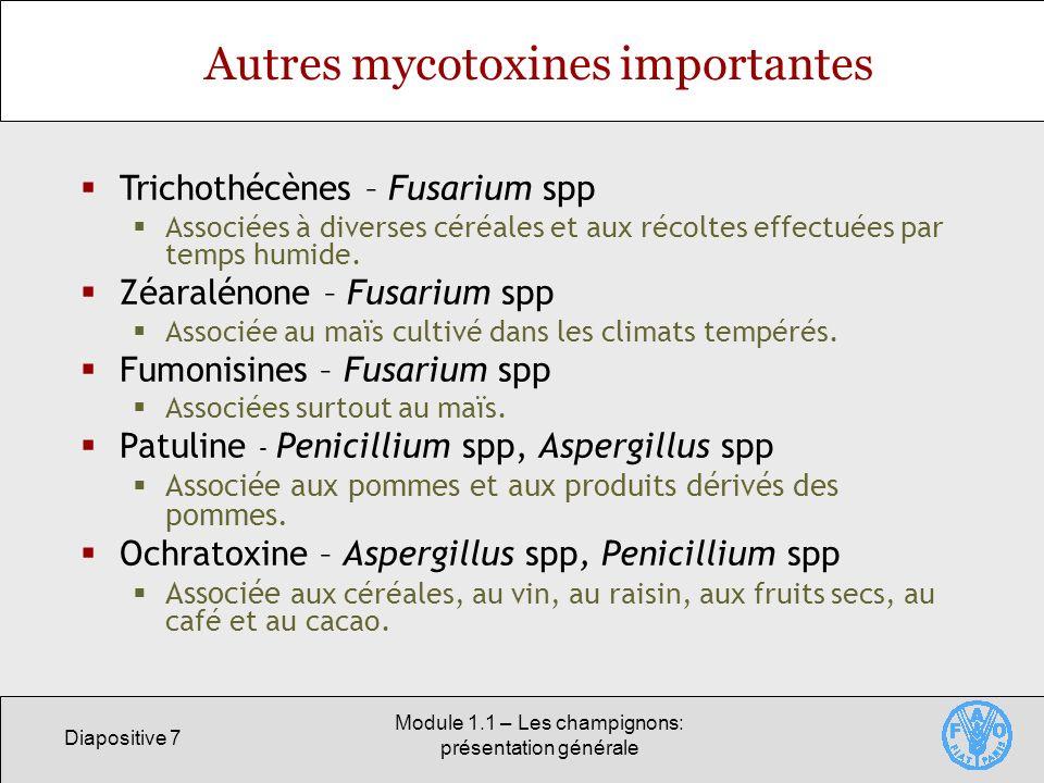 Diapositive 7 Module 1.1 – Les champignons: présentation générale Autres mycotoxines importantes Trichothécènes – Fusarium spp Associées à diverses cé